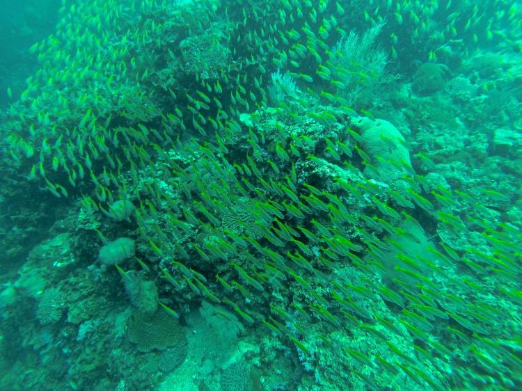 Koh Bida Nok - Scuba Diving in Phuket/Phi Phi - www.shewalkstheworld.com