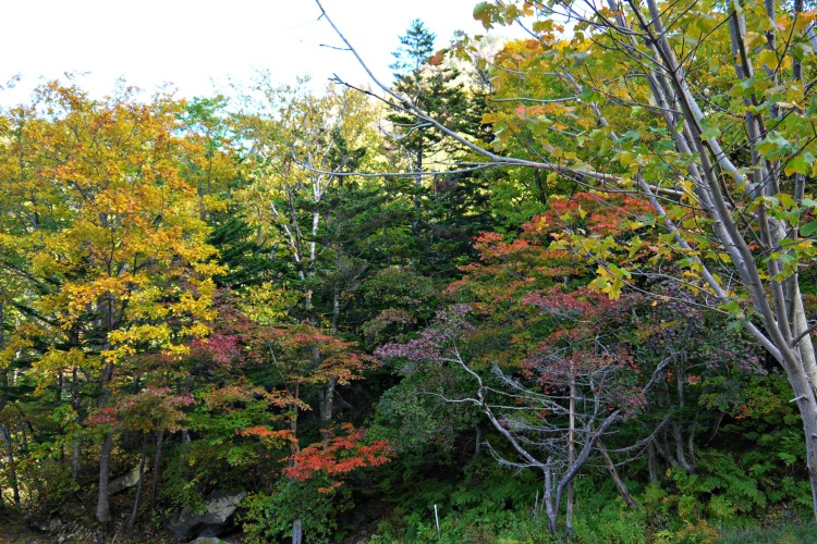 Hokkaido: Autumn Colors in Sounkyo at the Daisetsuzan National Park