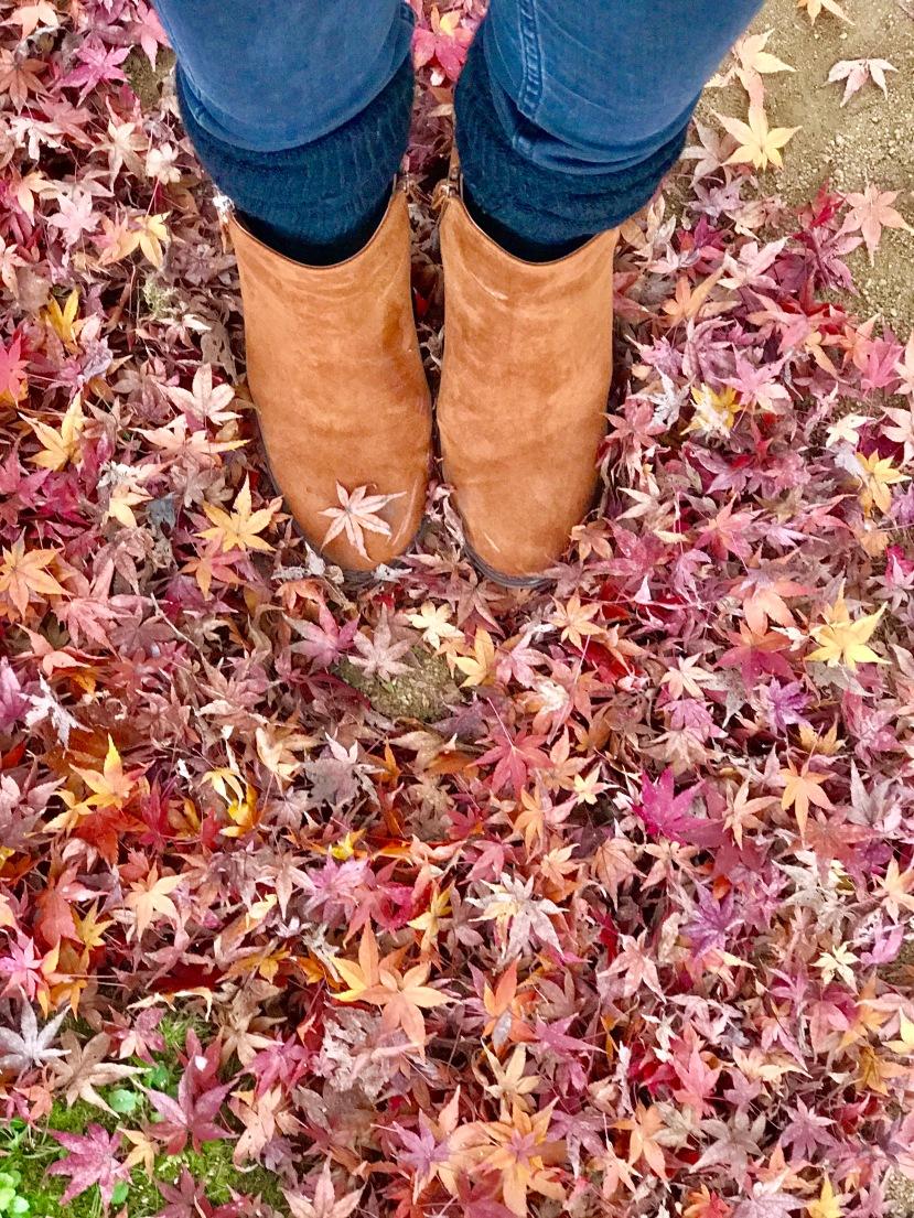 Okayama Autumn