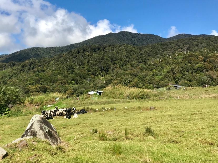 Kundasang Cattle Farm